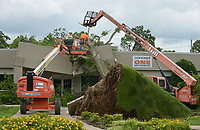 NWA Democrat-Gazette/BEN GOFF @NWABENGOFF<br /> Lonnie Pangle and son Josh Pangle of Pangle's Tree Service, based in Bentonville, remove a large hackberry tree Friday, May 19, 2017, with help from Oelke Construction Company, after it fell on a building at Beau Terre Office Park in Bentonville. Multiple trees in the office park were broken or downed after an overnight storm passed through the area.