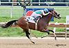 Modern Cowboy winning at Delaware Park on 9/14/13