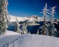 Snow-encrusted conifers along the shore of Crater Lake; Crater Lake National Park, OR