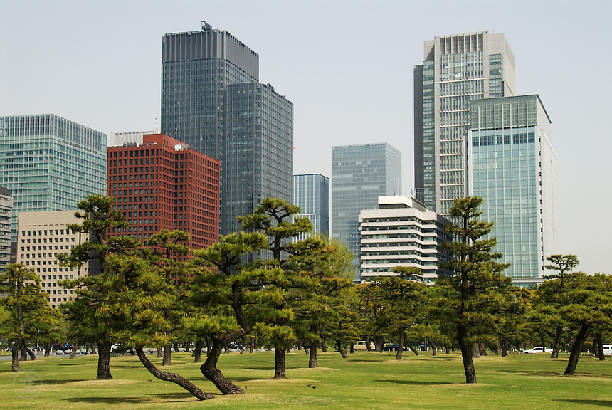 The skyscrapers of Tokyo from the Imperial Palace Gardens with manicured pines and lawn in the foreground. April 15, 2008