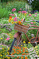 63821-22204 Old bicycle with flower basket in garden with zinnias,  Marion Co., IL