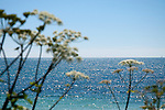 Seascape 0011