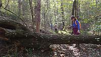 NWA Democrat-Gazette/FLIP PUTTHOFF <br />Over or under? Tom and Karen Mowry navigate a tree  Oct. 18 2019 across the Dogwood Nature Trail.
