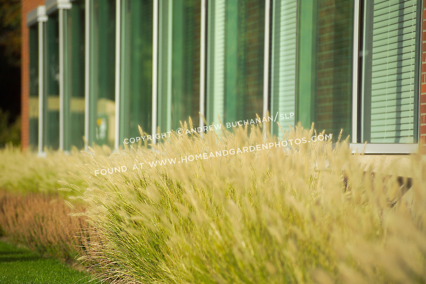 In this long, shallow focus, slightly abstract shot, a thick row of ornamental grasses lines the foundation of a brick building, with green-tinted windows above, in the late afternoon sunshine of eastern Washington state