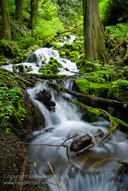 Stream above Latourell falls, Columbia River Gorge, Oregon
