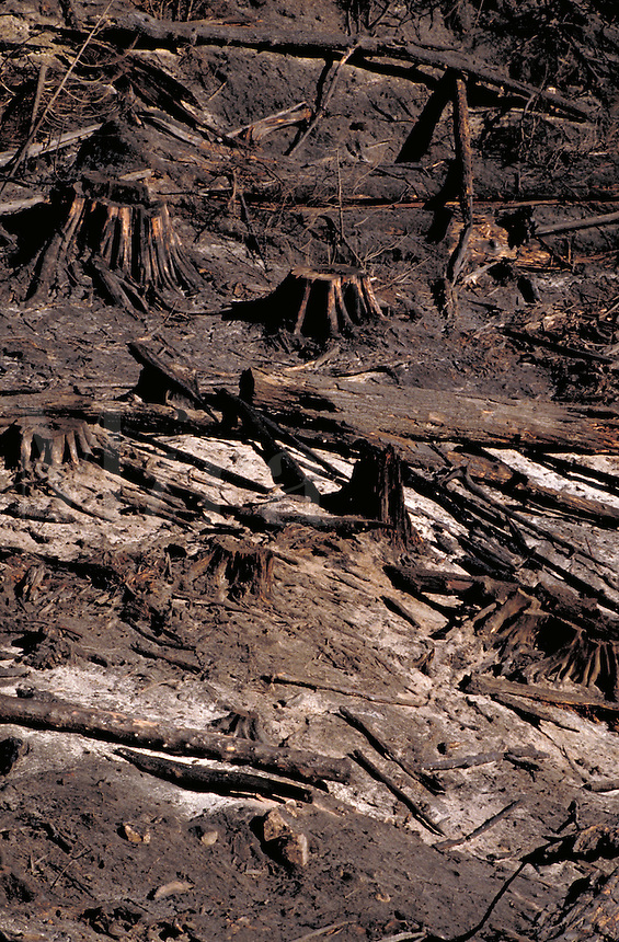 Slash burn after clearcutting. British Columbia Canada near Avola.