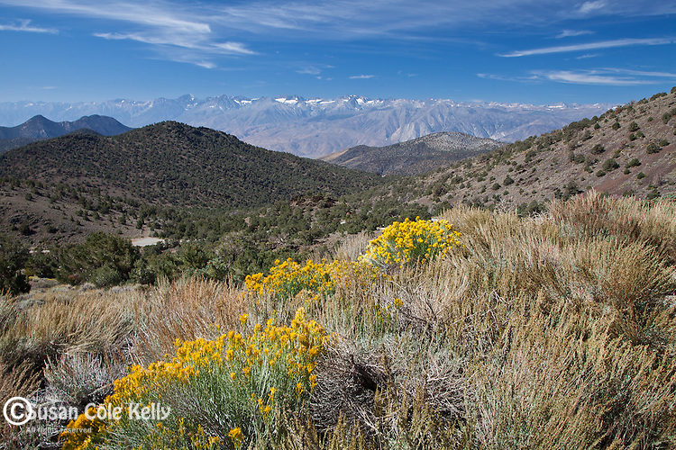 View of the Sierras from Inyo National Forest, CA, USA