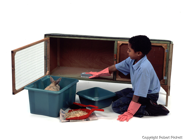 Young Boy cleaning out hutch for Pet Rabbit, Sable Colour, aged 10 years old, domestic, white background, cut out, studio,