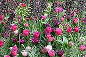 Gisela, FLOWERS, photos+++++,DTGK1928,#f#