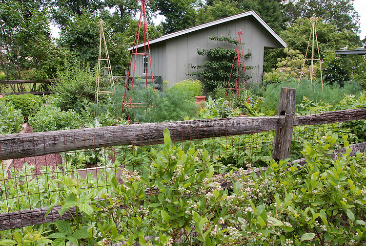 Blueberry Bushes, Fruit And Vegetable Garden With Fence And Shed In Backyard