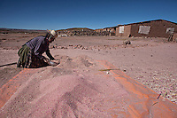 A picture dated April 5, 2013 shows a woman cleaning her quinoa in the region of Belen, in Oruro, Bolivia.  2013  was declared the international year of Quinoa by the UN.  Bolivia is the main producer of quinoa in the world.