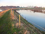 Coastal flooding leading to inundation of land not covered by flood water for 50 years, Ramsholt, Suffolk, England, December 2013