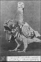 BNPS.co.uk (01202 558833).Pic: StewartWardrope/BNPS..***Please use full byline***..Aerial reconnaissance pigeon...Valuable bravery medals awarded to a flock of wartime homing pigeons have come to light to reveal the ingenious ways the British went about spying on the enemy...The birds were strapped in mini-parachutes and placed in small crates that were dropped behind enemy lines in order for the French Resistance to use...A corkscrew fan on the wooden crate unwound in the wind leading to the door to open.automatically in mid-air, allowing the pigeon to drop to the ground...The French attached coded messages about German military movements to the birds which flew across the English Channel with the precious intelligence...But one chilling note that has emerged after 70 years was written in German and informed the British the French recipient had been shot for spying having been found with a pigeon...Some 32 racing pigeons were awarded the prestigious Dickin Medal - the animal version of the Victoria Cross - for their acts of heroism in World War Two...The Royal Pigeon Racing Association owns five of them. Its general manager, Stewart Wardrope, took them along to the BBC's Antiques Roadshow to show them off...He also revealed the stories behind their award as well some of the other madcap inventions made by British boffins and used to gather intelligence using the birds...These included a clockwork camera strapped to the belly of a pigeon that automatically took reconaissance snaps of Nazi-occupied Europe before returning home...Of the five medals due to be featured on this Sunday's Antiques Roadshow, two were awarded to pigeons that delivered important intelligence from Europe six times between them...Another, named 'Beachcomber', brought back the first news of the disastrous landings at Dieppe in September 1942.