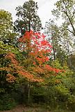USA, Oregon, Ashland, colorful trees at Lithia Park in the Fall