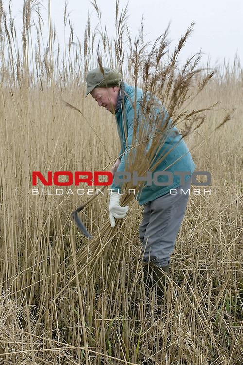 Reetschneider am DŁmmer See, Reet, Schilf,  Winter, Handwerk, Niedersachsen, Nordwestdeutschland, Hintergrund, Pflanzen<br /> <br /> Foto: nordphoto *** Local Caption *** Original Naturfoto