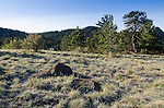 frost on meadow above Dry Gulch in the Rocky Mountains, Estes Park, Colorado, USA
