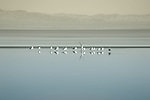 The breeding colony of flocks of birds at the Salton Sea in California.