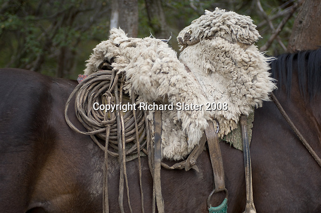 A gaucho's traditional sheepskin saddle, his rope and the other leather accessories required for his job. Gauchos are Patagonia's cowboys and are completely at home in the wilderness which makes up the whole of this southern part of Chile.
