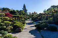 The carefully crafted trees and shrubs cast rounded shadows on the path into the Japanese Garden.