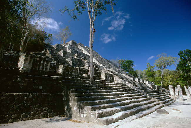 Mexico, Campeche, Calakmul, arqueological sites, arqueology, maya, pyramid, architecture, trees