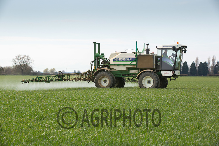 Applying magnesium to Winter Wheat<br /> Picture Tim Scrivener 07850 303986 <br /> scrivphoto@btinternet.com<br /> &hellip;.covering agriculture in the UK&hellip;.