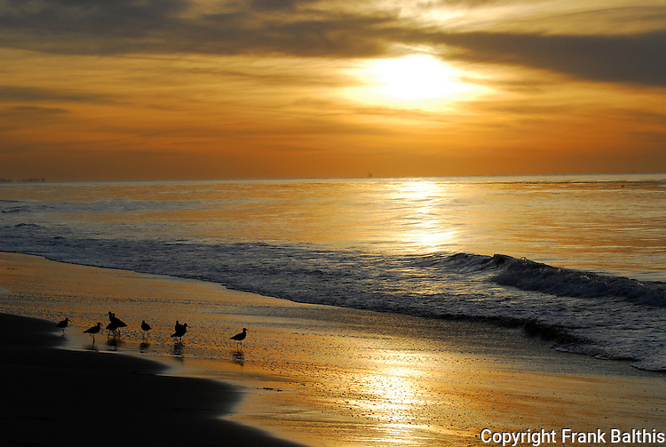 shorebirds at sunrise in Santa Barbara
