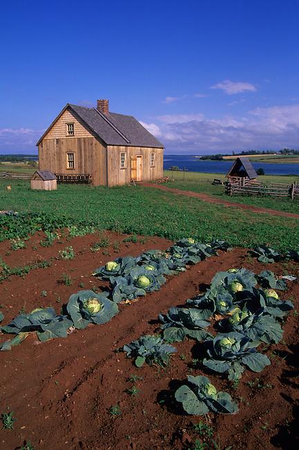 CANADA, PRINCE EDWARD ISLAND, NEAR RUSTICO, DOUCET HOUSE, 1770, GARDEN, CABBAGE
