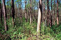 SPRING FOREST<br /> Highland, NJ