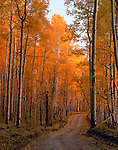 Last Dollar Road, Rocky Mountains, Colorado, autumn, fall, aspen, trees