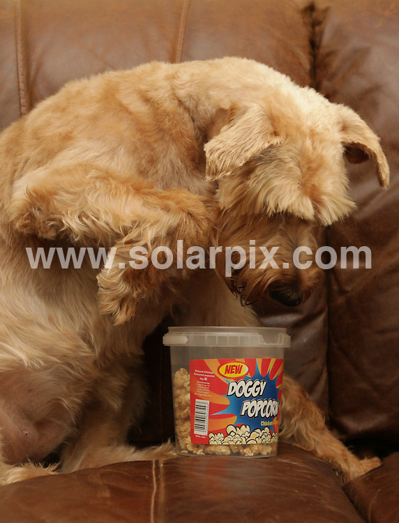 **ALL ROUND EXCLUSIVE PICTURES FROM SOLARPIX.COM**                                             **NO UK NEWSPAPER PUBLICATION**.**UK MAGAZINE & SUPPLEMENT PUBLICATION ONLY** AND NO PUBLICATION IN AUSTRALIA, BELGIUM, FRANCE, GERMANY, ITALY, SCANDINAVIA AND USA**                                                                                  To make your dog feel it's part of the family on a Saturday night in why not treat it to some chicken flavour popcorn or a herb and cranberry pizza biscuit..The Snack Shack treats are made from natural ingredients and have no artificial favours.                                                                           This pic:    Snack Shack treats                                                                                          JOB REF:   12815     SFE       DATE:   17.02.11                                                         **MUST CREDIT SOLARPIX.COM OR DOUBLE FEE WILL BE CHARGED**                                                                      **MUST AGREE FEE BEFORE ONLINE USAGE**                               **CALL US ON: +34 952 811 768 or LOW RATE FROM UK 0844 617 7637**