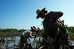 Children at th 70% of the mangrove planters and 'weeders' employed by Worldview International Foundation are women from the nearby villages. Here, she is cutting down 'creepers', a type of mangrove that was planted several years ago by locals for charcoal production. Now cutting mangroves for charcoal is not permitted by the authorities. WIF is allowed to remove them, and replant different mangrove species that have higher carbon sequestration rates.