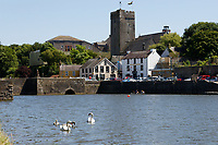 "Pictured: The killer swan, named by locals ""Mr Nasty"" (R) with his family in the pond by Pembroke Castle, west Wales, UK. Sunday 08 July 2018<br /> Re: A vicious killer swan is prowling around Pembroke, determined to see off any threat to his territory by ruthlessly drowning his victims.<br /> So far, he has killed 10 other swans, though many more have been saved from his attacks.<br /> Dubbed by locals ""Mr Nasty""  lives on the Castle Pond by Pembroke Castle. <br /> Bird sanctuary worker Maria Evans says she has watched him at work, drowning other swans, breaking their feet or pushing them over a sluice.<br /> In 2010, another killer swan dubbed ""Hannibal"" had his wings clipped after attacking other swans in the same pond."