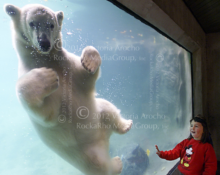 Abby Wilkie, 5, of Little Compton, R.I., reacts as Cody the baby polar bear swims toward her at Roger Williams Zoo in Providence, R.I., Wednesday, Oct. 31, 2001. Despite events since Sept. 11, 2001, Wilkie's mom has decided to let her and her twin sister Hannah go trick-or-treating this Halloween. (AP Photo/ Victoria Arocho)