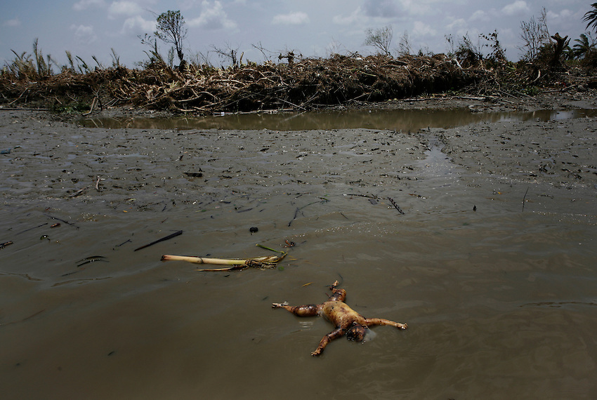 The body of a child floats in the Pyapon River (Irrawaddy Delta), Burma, Thursday, May 8, 2008. Cyclone Nargis struck the Irrawaddy Delta region of Burma on May 4th/5th, leaving a path of destruction in its wake and killing approximately 130,000 people.