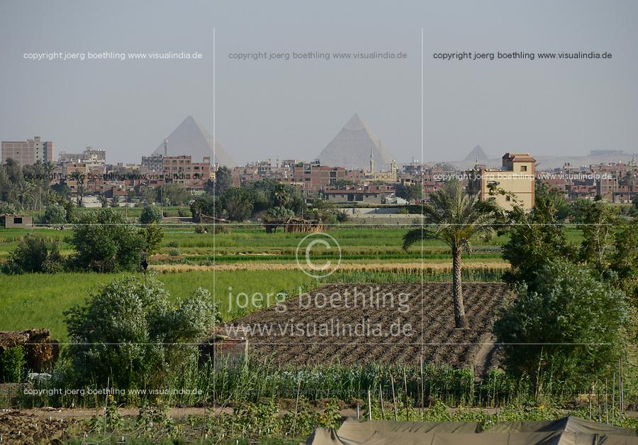 EGYPT, Cairo, pyramids of Giza, farming in the Nile river delta, due to massive construction and city growth the fertile arable land is decreasing  / AEGYPTEN, Kairo, Pyramiden von Gizeh, Landwirtschaft im Nil Flussdelta, durch zunehmenden Bau von Haeusern schrumpft die fruchtbare landwirtschaftliche Flaeche