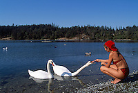 Woman sitting on haunches and feeding Mute Swans (Cygnus olor) at Esquimalt Lagoon Migratory Bird Sanctuary, Colwood, Vancouver Island, BC, British Columbia, Canada