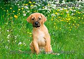 Marek, ANIMALS, REALISTISCHE TIERE, ANIMALES REALISTICOS, dogs, photos+++++,PLMP2962,#a#, EVERYDAY
