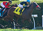 October 5, 2019: Stubbins, trained by Doug O'Neill, wins the Woodford Stakes (G2) at Keeneland on October 5, 2019 in Lexington, KY. Jessica Morgan/ESW/CSM