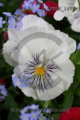 Gisela, FLOWERS, photos(DTGK1478,#F#) Blumen, flores, retrato
