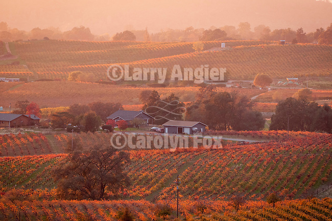 Colorful vineyards changing color in autumn in the Shenandoah Valley of Calif...Swason Hill at sunset.