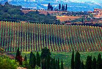 Farm crops, Tuscany, Italy