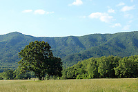 Trees and prairie with backdrop of green hills in the cades cove valley in the great smoky mountain national park, Tennessee, USA
