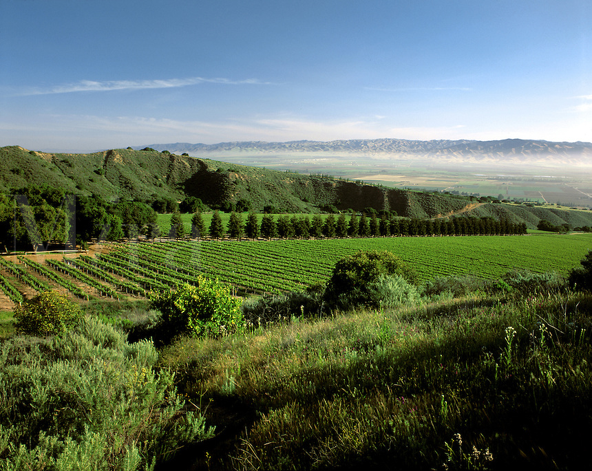 SMITH & HOOK/HAHN ESTATES Vineyard has a spectacular view across the SALINAS VALLEY to the GABILAN MNTS. - CALIF..