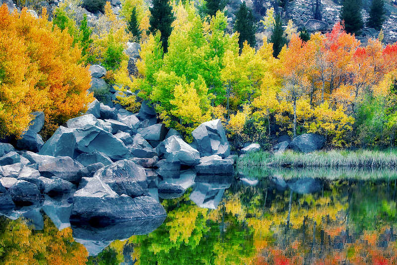 Cardinal Pond with fall colored aspens. Bishop Canyon. California