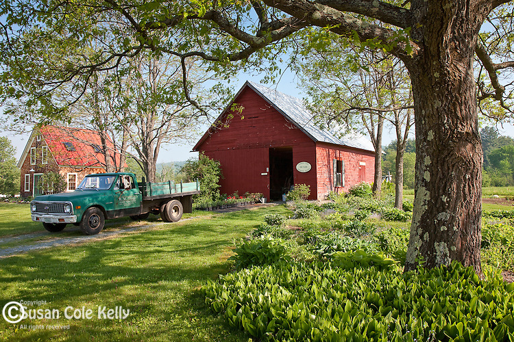 Cut flower farm in Sugar Hill, NH, USA