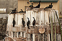 Birds resting at Port ANgeles, WA