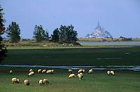 Europe/France/Normandie/Basse-Normandie/50/Manche: Mont Saint-Michelet moutons de pré salé