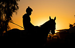 OCT 28: Scenes from Breeders' Cup training, at Santa Anita Park in Arcadia, California on Oct 28, 2019. Evers/Eclipse Sportswire/Breeders' Cup