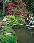 Seattle, WA<br /> Flowering rhododendrons and azaleas around pond and stone bridge in the Kubota Japanese Gardens