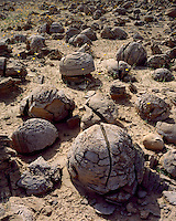 Eroded clay formations at the Pumpkin Patch; Anza Borrego Desert State Park, CA
